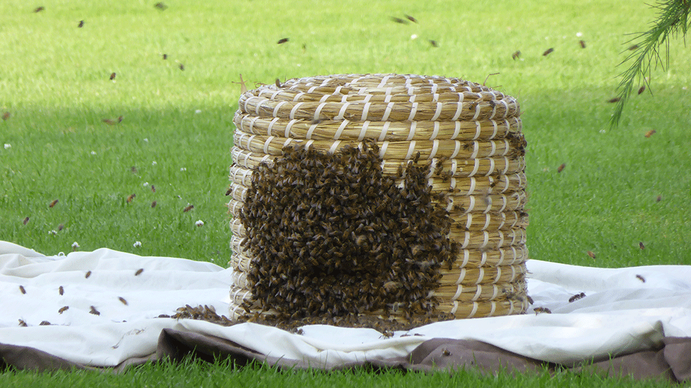 Bee Supplies And Equipment Affordable Bee Supplies